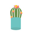 cactus flower in pot houseplant isolated icon vector image