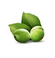 green walnuts with leaves isolated on a white vector image