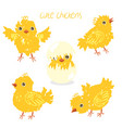 set with yellow chickens isolate on a white vector image