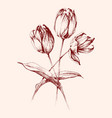 bunch tulip flowers hand drawn decoration vector image vector image