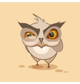 Owl is angry vector image vector image