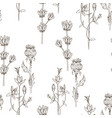 seamless pattern of wild herbal flowers vector image vector image