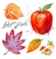autumn leaves mushrooms and apple vector image vector image