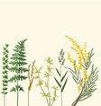 botanic herbarium vector image vector image