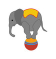 elephant on the ball in circus vector image vector image