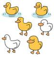 set of duck vector image