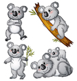 A group of koalas vector image vector image