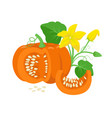 orange pumpkin vegetable with green leaves yellow vector image vector image