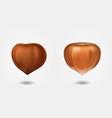 ripe and dried hazelnuts 3d realistic vector image