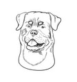 rottweiler face isolated on white background vector image vector image