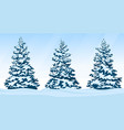 set of snow-covered firs vector image vector image