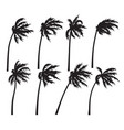 tropical palm trees silhouette in wind storm vector image