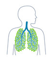 human lungs healthy clean lungs bronchial tree vector image