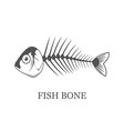 fish bone fish skeleton grey vector image
