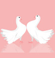 pair of white dove vector image vector image