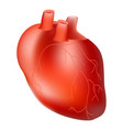 human heart internal organ anatomy concept vector image
