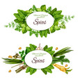 natural herbal spices and herbs vector image vector image