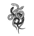 binded snakes sketch engraving vector image