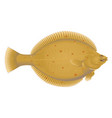 european plaice fish vector image vector image