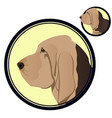 bloodhound head in circle vector image