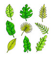 plants set with tropical collection fresh green vector image