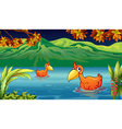 Two ducks swimming in the river vector image vector image