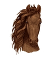 Arabian brown stallion portrait vector image vector image