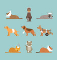 cats and dogs get sick vector image vector image