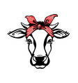 cow head with red bandana black graphic vector image vector image
