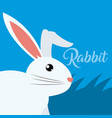 rabbit cute animal cartoon vector image