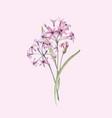 watercolor allium flower
