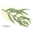 eucalyptus leaves vector image