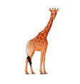 realistic giraffe isolated vector image