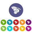 blueberry icons set color vector image vector image