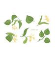 Bundle elegant detailed botanical drawings of