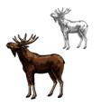 elk sketch wild animal isolated icon vector image vector image