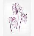 engraved design elements sketch flower decorative vector image