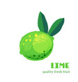 fresh lime isolated on white background vector image vector image