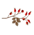 Rosehip Berries vector image