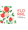 camellia flower collection concept banner cartoon vector image