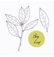Hand drawn bay leaf and branch with leves isolated vector image
