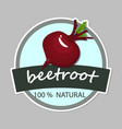 hand drawn beetroot with sliced root composition vector image
