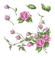 hand drawn roses vector image