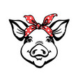pig head with red bandana farm animal graphic vector image vector image