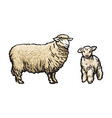 sketch cartoon style sheep and lamb set vector image
