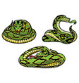 snakes on white vector image vector image