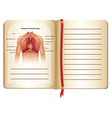 Anatomy of human lungs on page vector image vector image