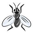 flat fly on white background vector image vector image