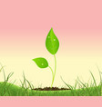 spring plant growing in a garden vector image