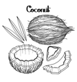 Graphic coconut collection vector image vector image